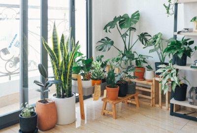 Most Demanding Indoor Plants